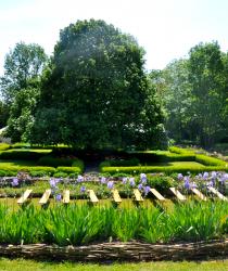 Journée aux iris au Prieuré de Moreaucourt