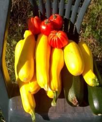Vente de fruits et légumes bio