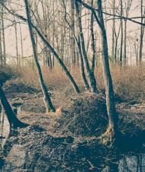 Balade nature - Les marais de Saint-Gilles